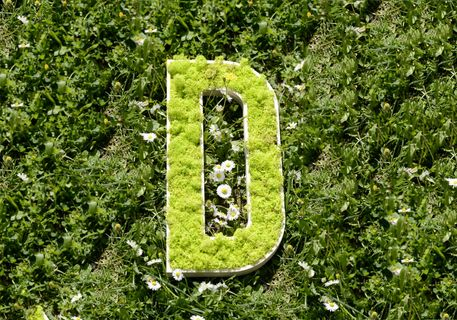 logo-vegetal-sur-bois